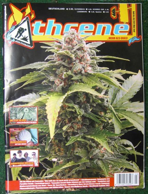 Thcene-cover